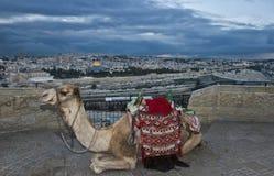 Jeruzalem en kameel Stock Afbeeldingen