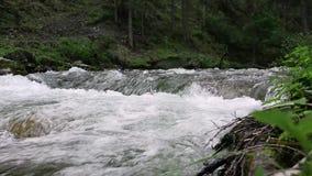 Jerzyk wody przepływ w małej halnej rzece, drzewa wzdłuż brzeg rzeki zbiory