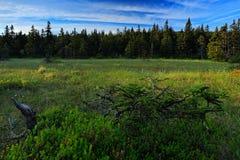 Jeseniky berg, Praded kulle, prydlig skog och träskäng, sommarmorgon med blå himmel med vita moln, Morava, Royaltyfri Bild