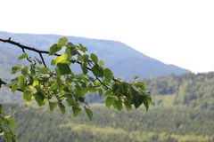 Jeseniky-Gebirgstschechische Republik Stockbilder