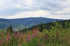 Jeseniky mountains (czech republic) Stock Images