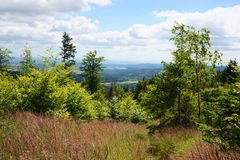 Jeseniky mountains with flowers Royalty Free Stock Photos