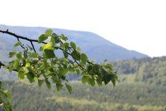 Jeseniky mountains czech republic Stock Images