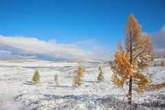 jesień najpierw snow obraz royalty free