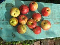 Jesień słoneczny dzień Czerwoni jabłka na błękicie zdjęcia royalty free