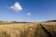 jesień łąka Obrazy Stock