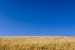 jesień łąka Zdjęcie Stock