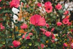jesień łatwy karciany redaguje kwiaty wakacje modyfikuje Zdjęcie Royalty Free