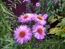 jesień łatwy karciany redaguje kwiaty wakacje modyfikuje Obraz Stock