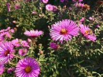 jesień łatwy karciany redaguje kwiaty wakacje modyfikuje zdjęcia royalty free