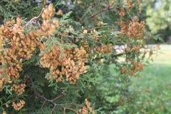 jesień łatwy karciany redaguje kwiaty wakacje modyfikuje Obrazy Stock