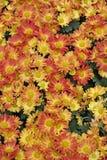 jesień łatwy karciany redaguje kwiaty wakacje modyfikuje Zdjęcie Stock