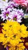 jesień łatwy karciany redaguje kwiaty wakacje modyfikuje Fotografia Royalty Free