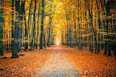 jesień ławki kolorowy puszek spadać liść parkują drzewa Zdjęcie Royalty Free