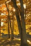 jesień ławki natury parka Poland sezonowy widok Zdjęcia Stock