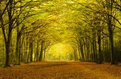 Jesień łuki Obraz Stock