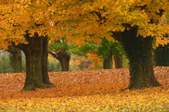 jesień ścieżka Zdjęcia Royalty Free