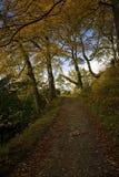 jesień ścieżka Obraz Royalty Free