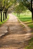 jesień ścieżki drzewa Fotografia Stock