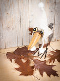 Jesień śmieszny ptak obraz royalty free