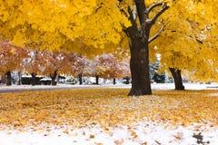 jesień śnieg Fotografia Stock