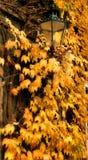 Jesień światła Fotografia Royalty Free