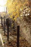 jesień światło słoneczne Obraz Stock