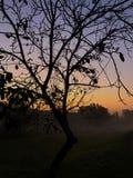 Jesień świt fotografia stock