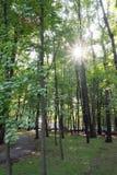 Jesień świt w lesie Obraz Stock