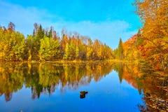 Jesień, żółci drzewa, woda Obraz Royalty Free