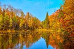 Jesień, żółci drzewa, woda Obrazy Royalty Free