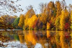 Jesień, żółci drzewa, woda Zdjęcia Royalty Free