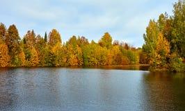 Jesień, żółci drzewa, woda, Obraz Royalty Free