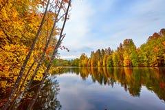 Jesień, żółci drzewa, woda Fotografia Royalty Free