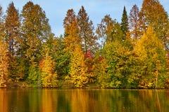 Jesień, żółci drzewa, woda, Obrazy Stock