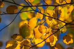 Jesień żółci liść Zdjęcia Royalty Free