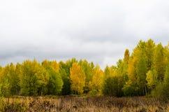 Jesień żółta, jesienny, drewna, ulistnienie, tło, botanika Obraz Royalty Free