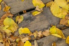 jesień żółte liście Obraz Royalty Free
