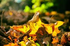 jesień żółte liście Obrazy Stock