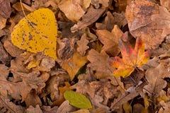 jesień żółte liście zdjęcia royalty free
