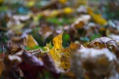 jesień żółte liście Zdjęcie Royalty Free