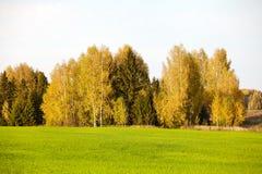 Jesień, żółty drewno, łąki Zdjęcia Royalty Free
