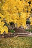 Jesień żółty drzewo Obrazy Royalty Free