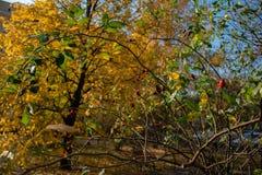 Jesień żółty jaskrawy park fotografia stock
