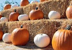 jesień żniwo Zdjęcie Royalty Free