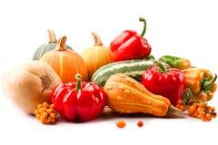 jesień żniwo Fotografia Stock