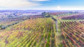 Jesień, żniwo Aglianico Del Sęp Lucan wzgórza Zdjęcie Royalty Free