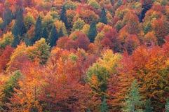jesień żywy barwiony wielo- fotografia stock