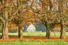Jesień Zdjęcia Royalty Free