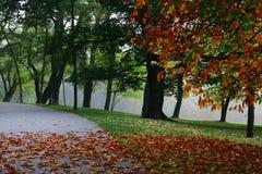 Jesień -7 obraz royalty free